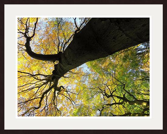 herfst 3 in lijst.jpg