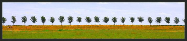 Beemster Bomen
