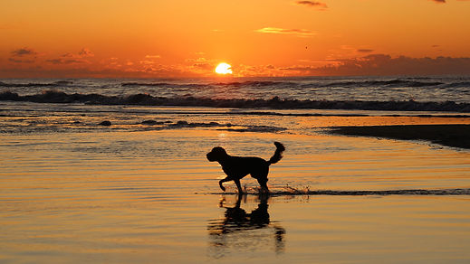 Dutch Beach with dog at sunset