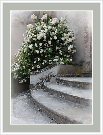 Stairs with roses