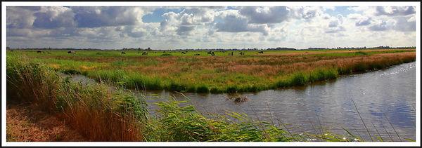 Dutch Meadow Framed