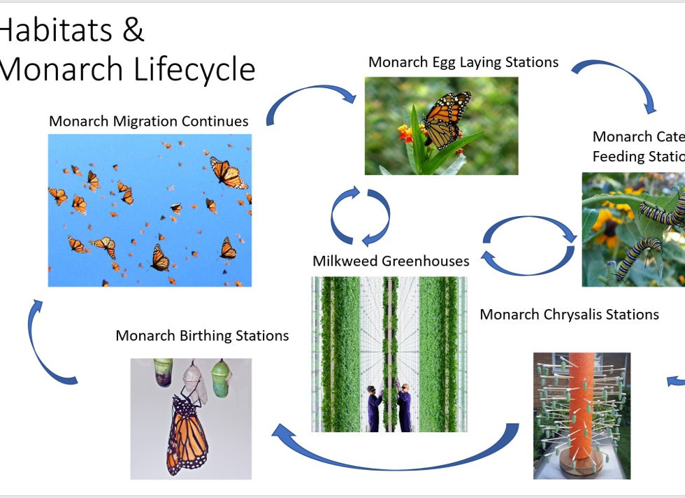 Monarch Butterfly Lifecycle and Habitat