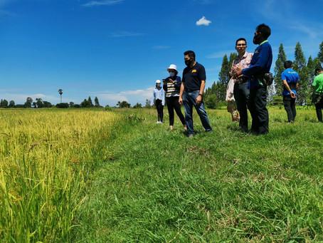 泰國使用區塊鏈技術 提高有機米信譽