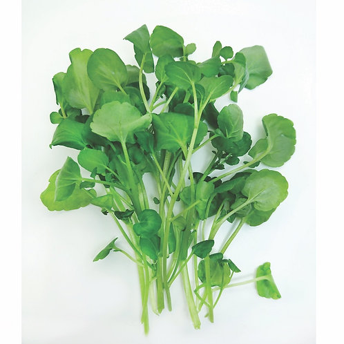 VMO 蔬菜統營處 水耕西洋菜苗 | Hydroponic Watercress Seedling