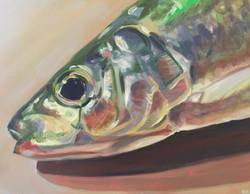 Sardine Study