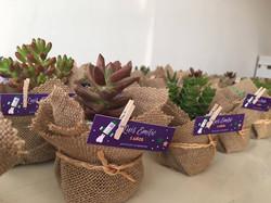 Plantas suculentas para invitados