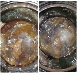 Thin, partially-formed scoby with brown yeast underneath.