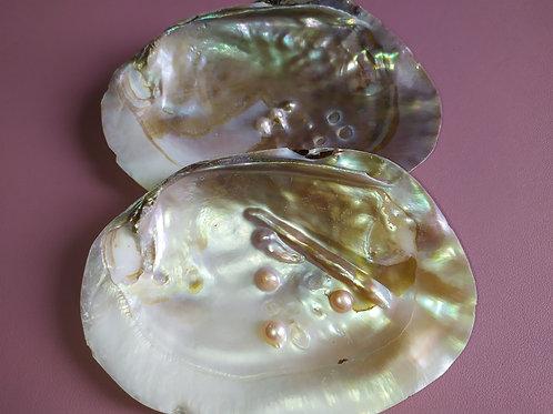 Coquille de nacre avec perles intégrées