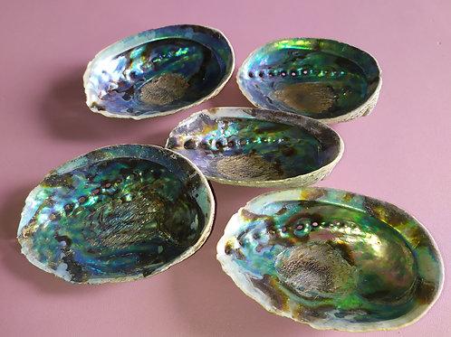 Coquille d'abalone arc-en-ciel
