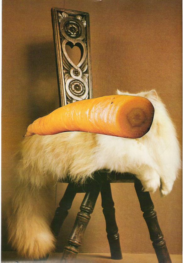 carrot cat two.jpg