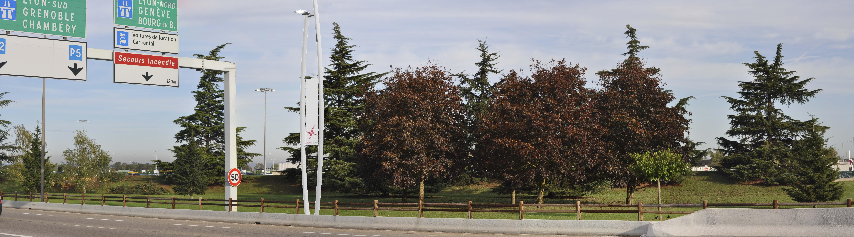 Voirie et arbres _ avant