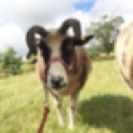 shop__#walkasheep #sheeptrekking #sheep