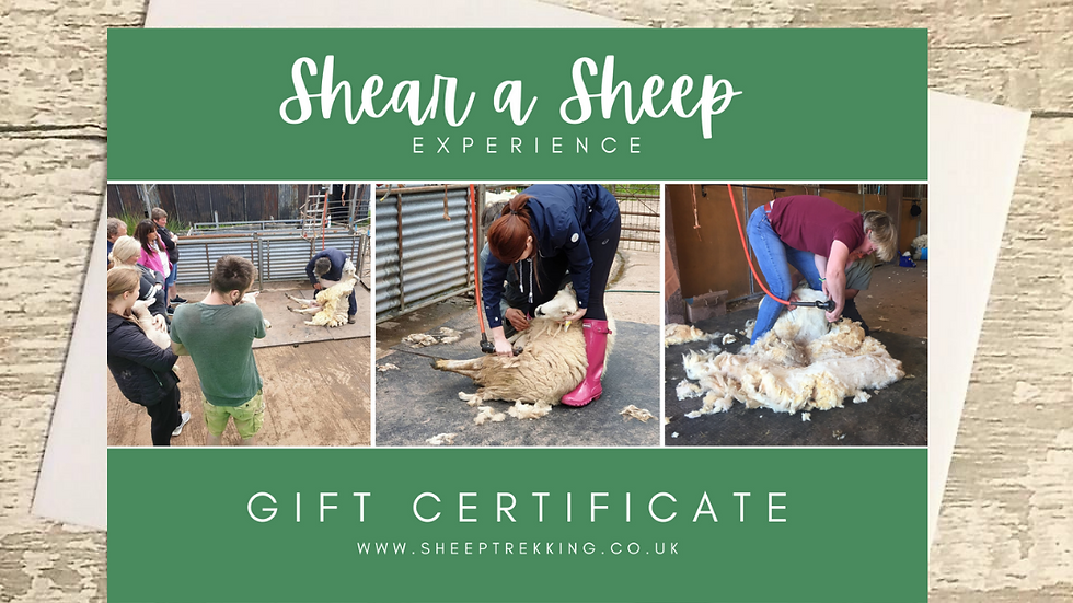 Shear a Sheep - Gift Voucher