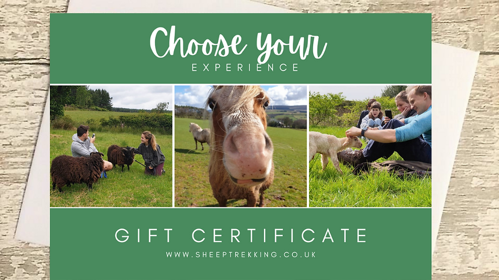 Choose your own experience - Gift Voucher