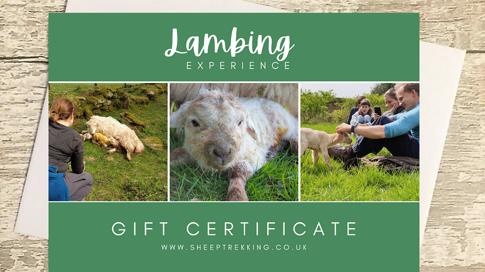Lambing Experience Day- Gift Voucher