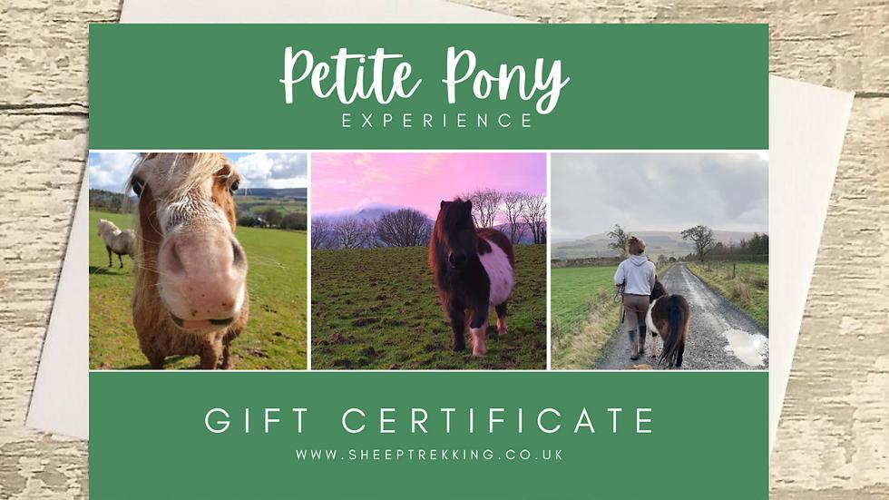 Petite Pony Experience - Gift Voucher