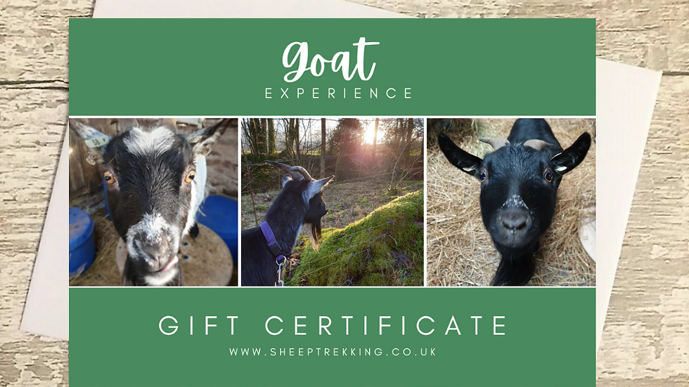 Goat Experience - Gift Voucher