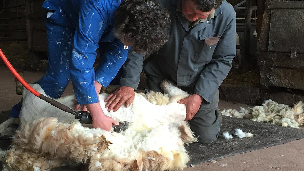 Shear a Sheep - Gift Voucher