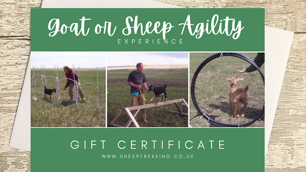 Sheep or Goat Agility Experience - Gift Voucher