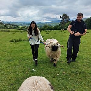 Sheep Walk 10am
