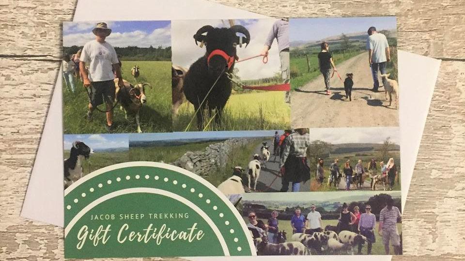 Sheep Trek/Walk - Gift Voucher