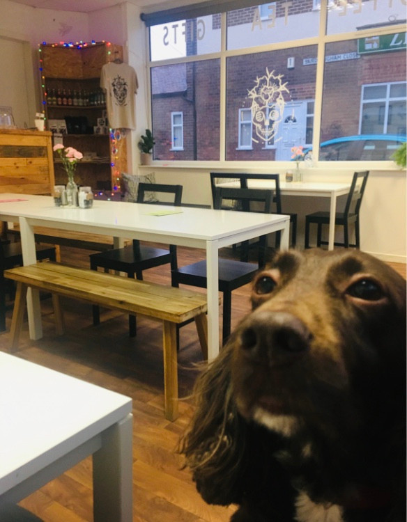 Dog Friendly Places on the Wirral