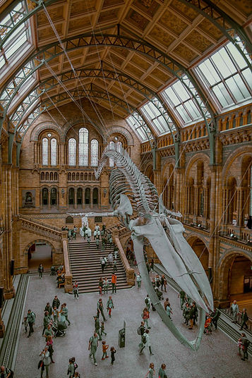 Natural History Museum Hintze Hall Blue
