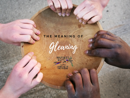 The Power of Gleaning: a meaningful bridge to food equity