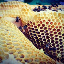 Follow The Honey Bee