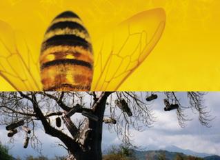 APIMONDIA FIRST SYMPOSIUM ON THE AFRICAN BEE & BEEKEEPING