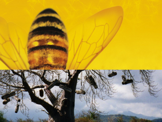 APIMONDIA FIRST SYMPOSIUM ON THE AFRICAN BEE & BEEKEEPING