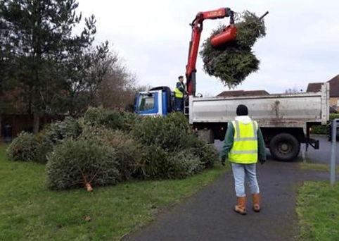 Christmas Tree Recyling.jpg