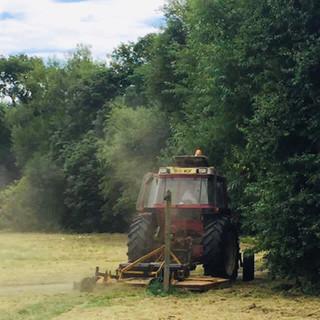 Grass Cutting2.jpg