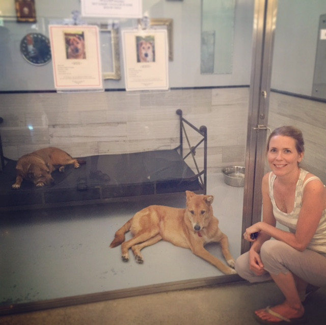 Dog Tales in King City, Ontario