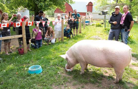 Happily Ever Esther Farm Sanctuary