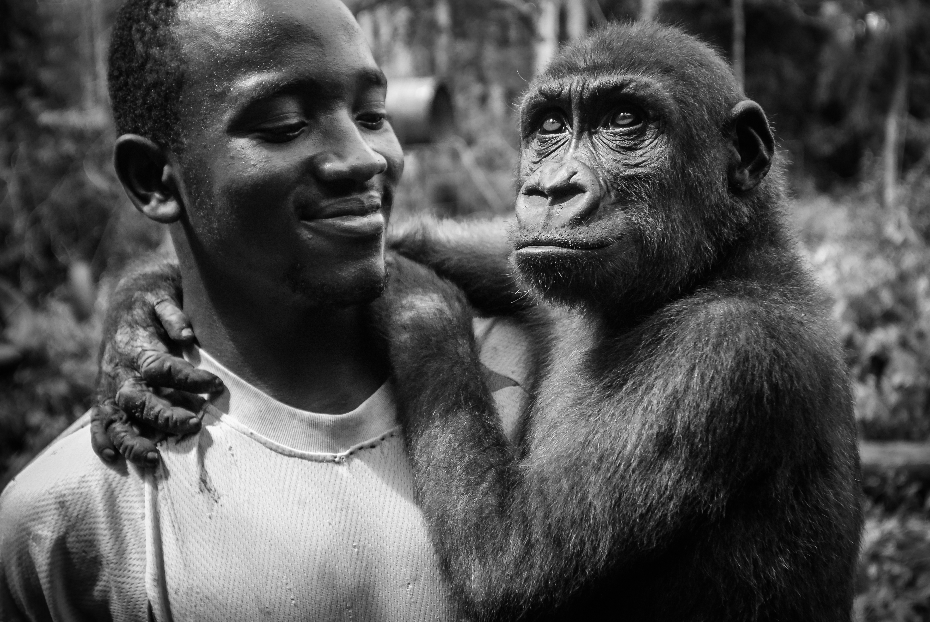 Thierry with a juvenile gorilla, rescued from the bushmeat trade. Cameroon, 2009.