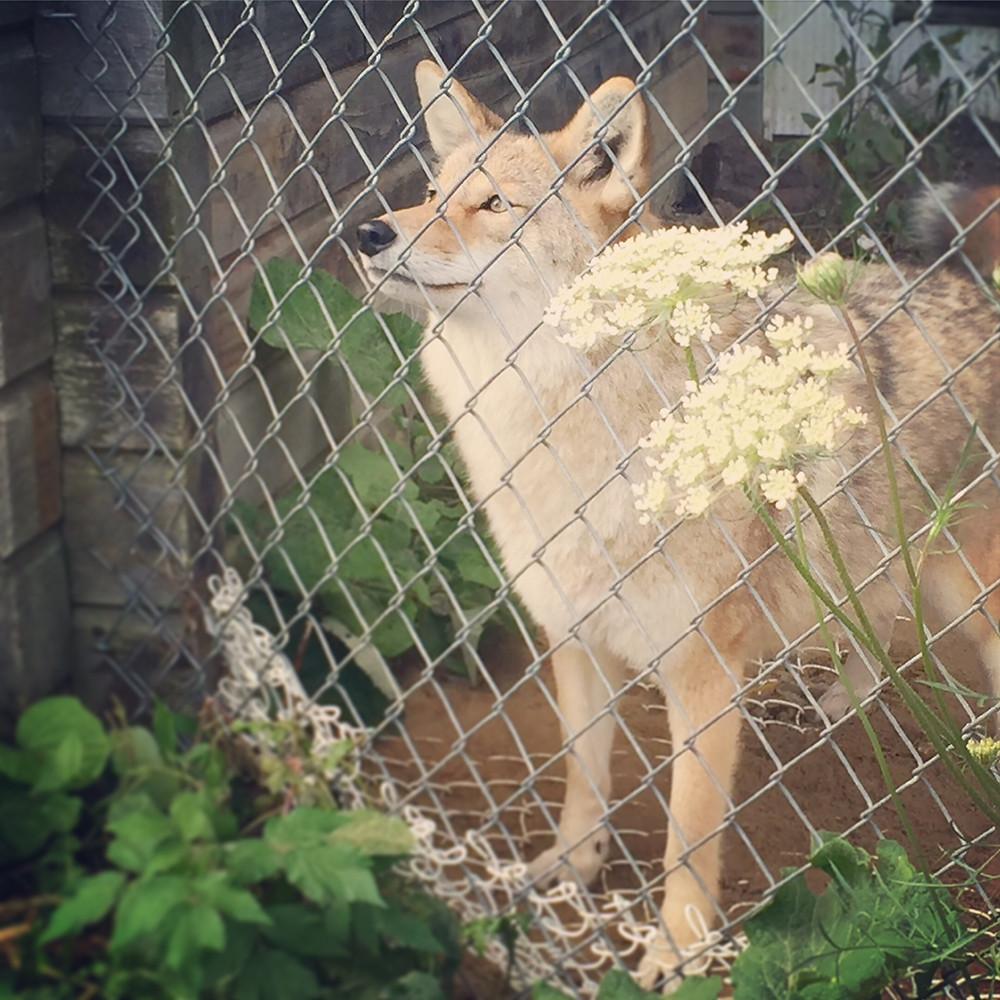 Aspen Valley Wildlife Sanctuary
