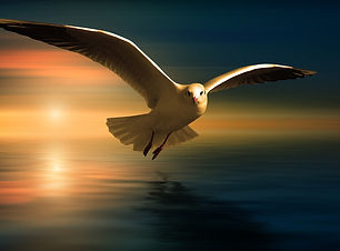 gull-3727467_1920.jpg