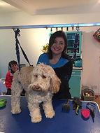 Dog Goe Fabulous Grooming in Ambleside