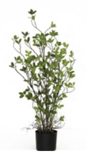 bidk faux rubber plant small.png