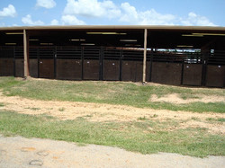 One View of Stalls