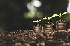 financial-growth-coins-seedling.jpg