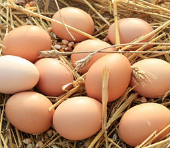 Buy Farm Fresh Eggs Now