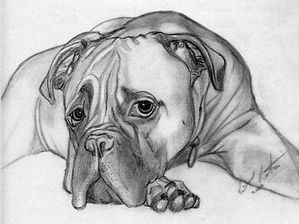 My first Drawing of Bailey.