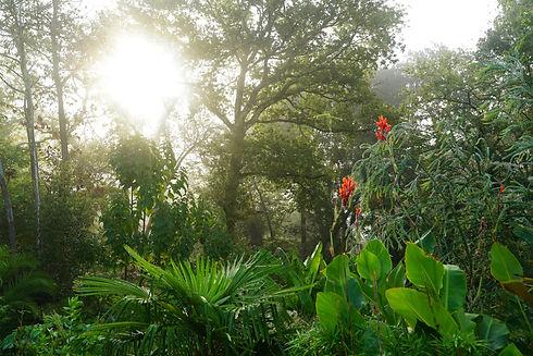 canopee-jardin-des-barthes.jpg