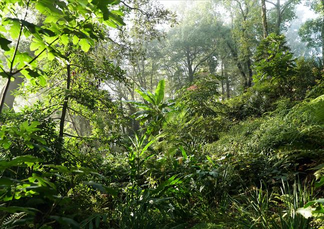 jardin-des-barthes-canopée.png