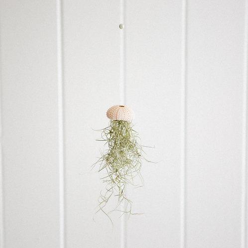 Mini Let Happy Flow Jellyfish | Jade Crystal
