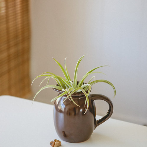 Grounded   Picture Jasper Crystal   Air Plant