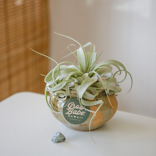 Intuition | Emerald Crystal | Air Plant