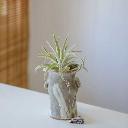 Protection | Agate Crystal | Air Plant